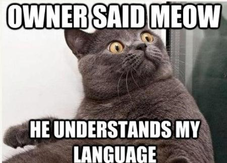 Owners said Meow, he understand my language