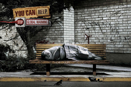 WWF: Homeless Seal