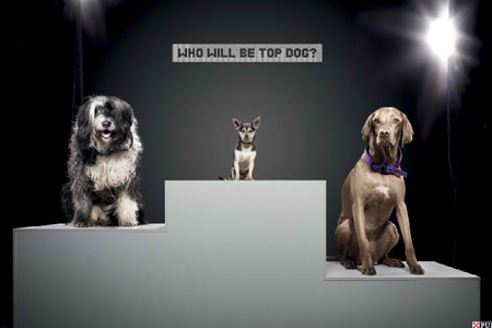 Podium of Dogs Animal Advertisement