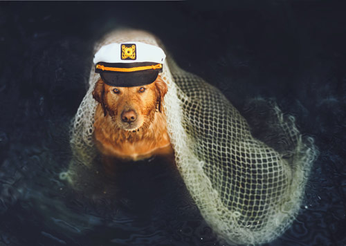 Dog Photography: Shipwrecked