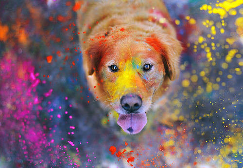 The Explosion of Colors