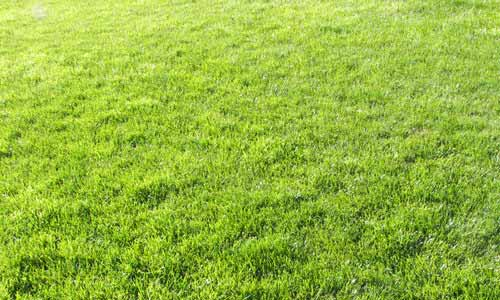 Free Grass Texture Collection