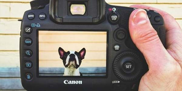 10 Pet Photography Tips for Capturing Animals' Personality