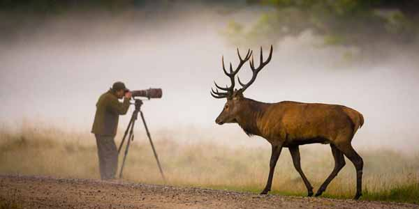10 Wildlife Photography Tips for Shooting in the Wild