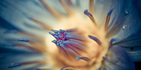 10 Botanical Photography Tips for Breathtaking Nature Shots